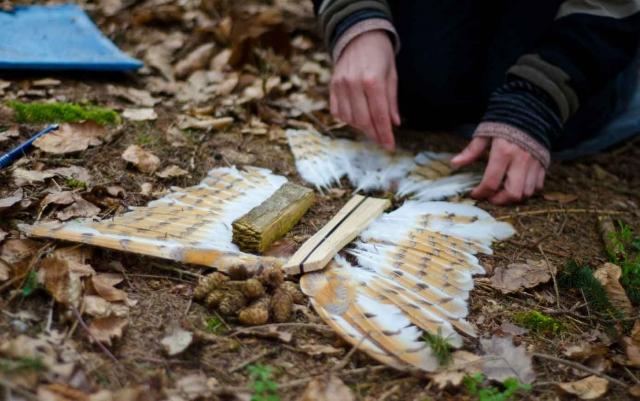 Wildnispaedagogik Vogelsprache Kernroutinen Wildnisschule Weltenwandler