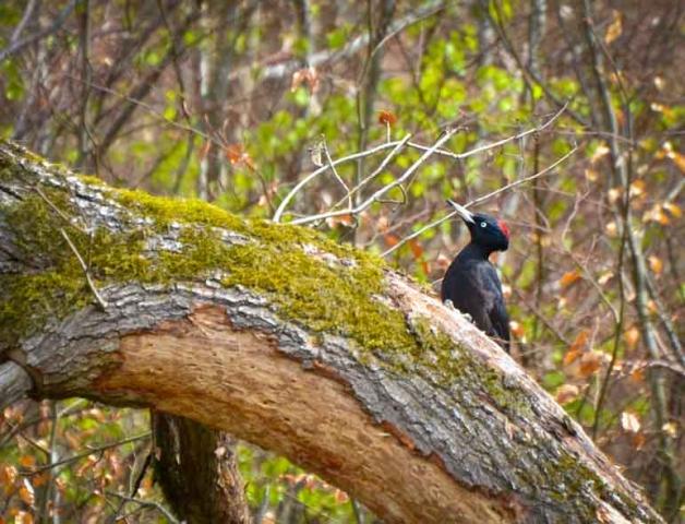 Wildnisschule Weltenwandler Wildnispaedagogik Survival Outdoor Kurse Naturverbindung Bushcraft Rites of Passage