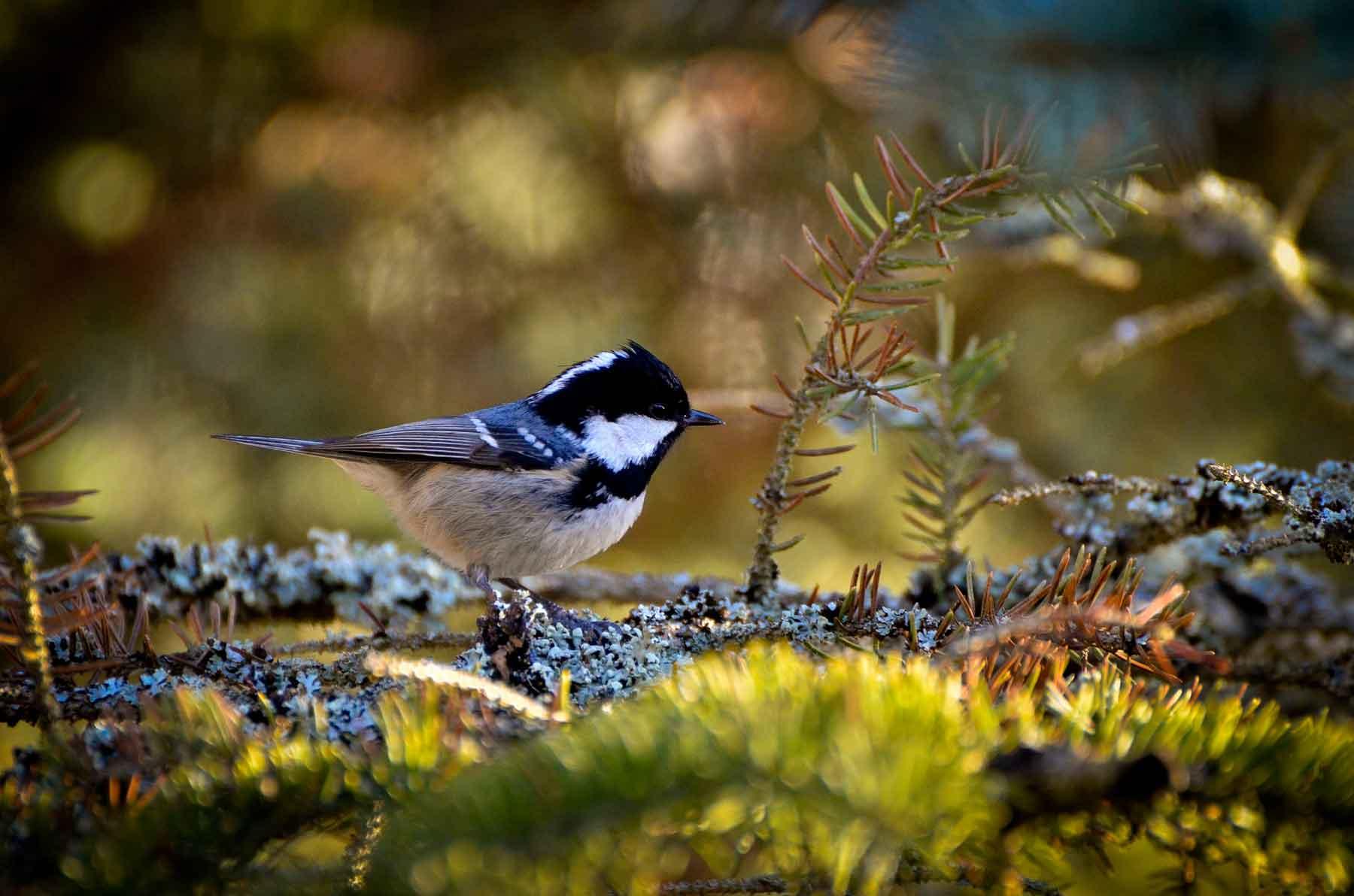 Vogelsprache Kurs