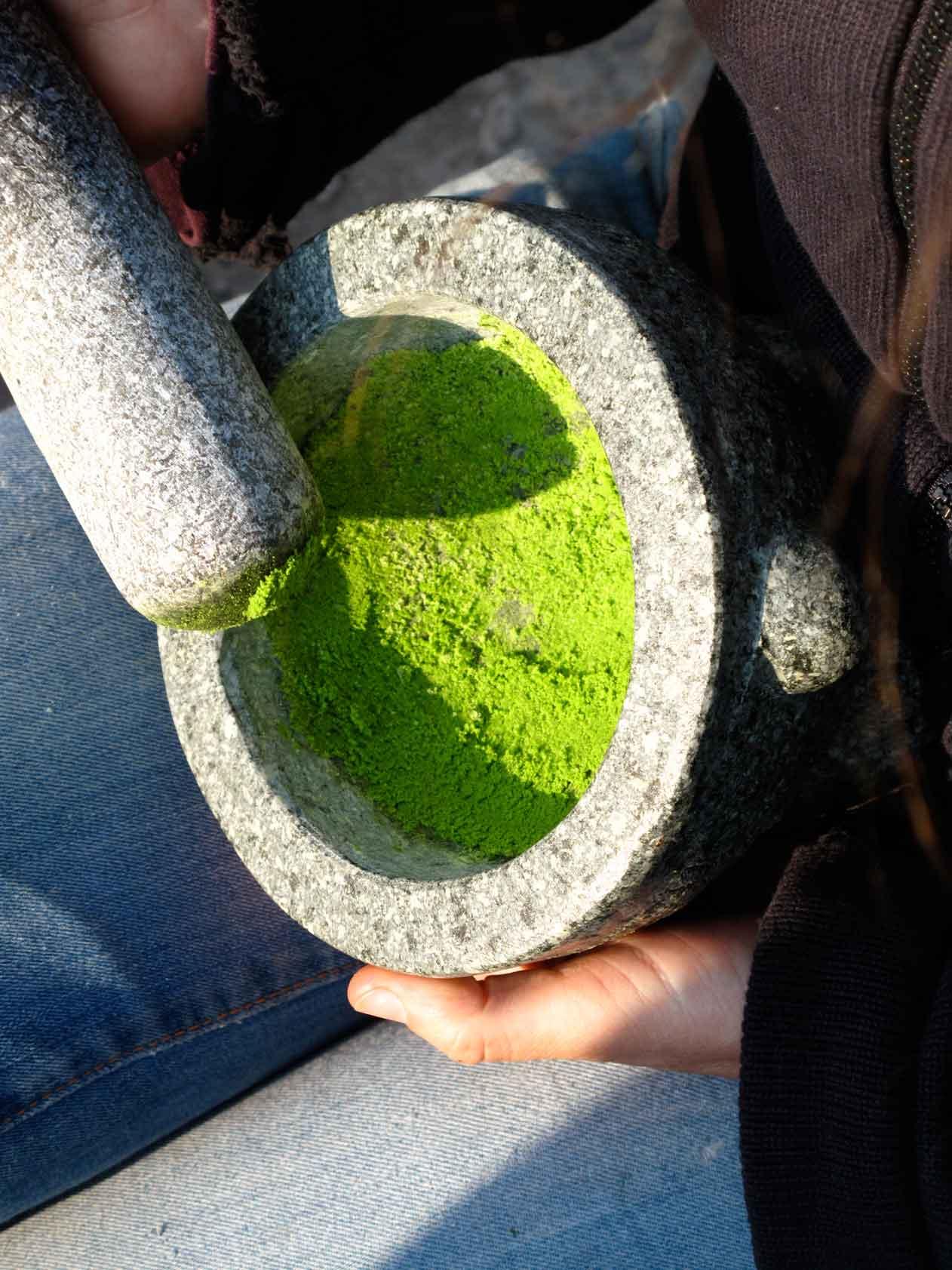 Heilpflanzen Kurs Heilkraeuter und Wildkraeuter verarbeiten und sammeln
