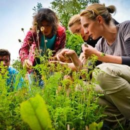 Heilpflanzen Kurs Wildkraeuter sammeln