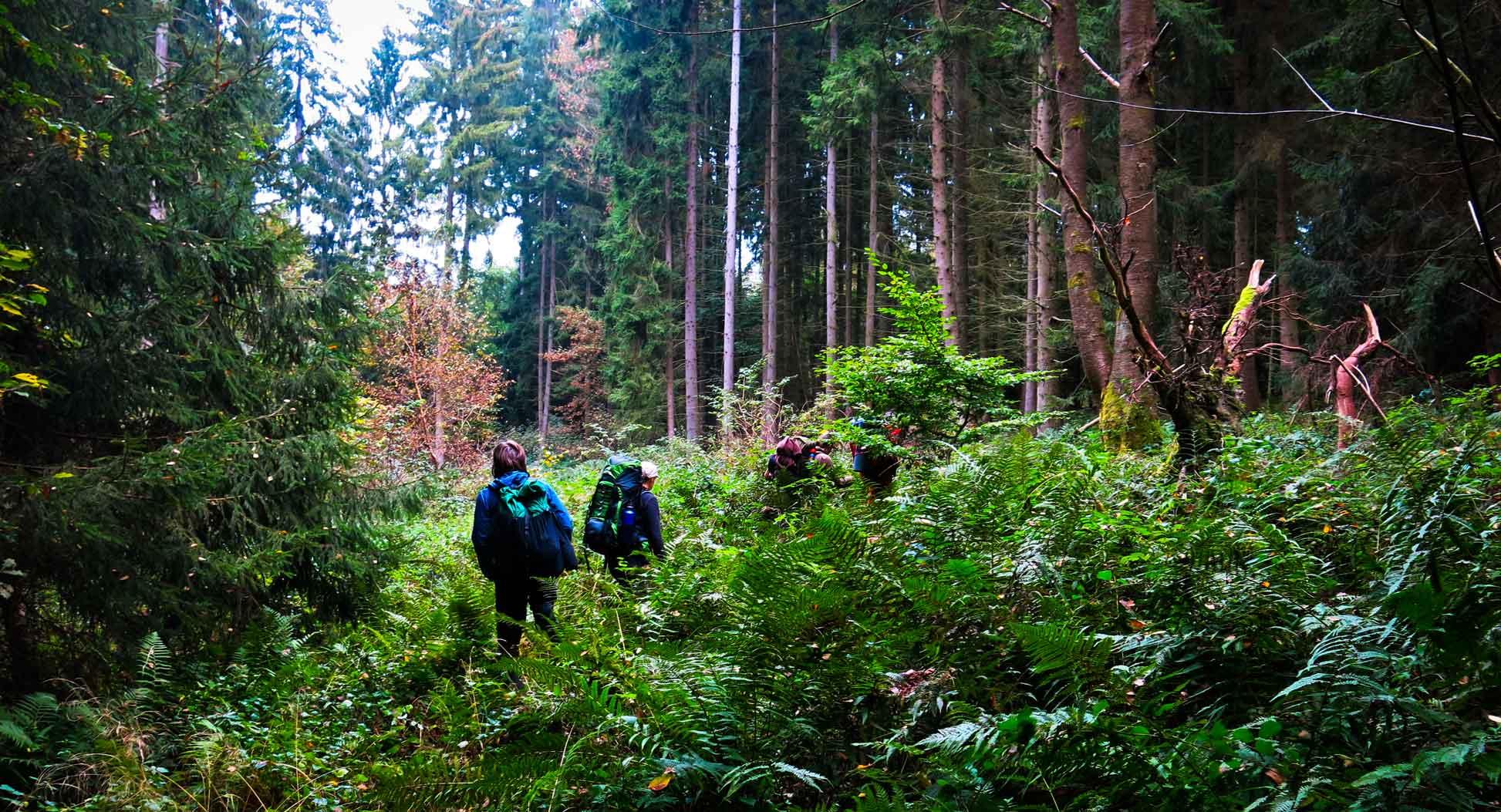 Outdoor Trekking Guide Ausbildung Wandern in waldreichen Gebieten