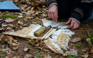 Wildnisschule Weltenwandler Wildnispaedagogik Naturpaedagogik Waldpaedagogik