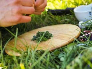 Ausbildung Wildpflanzen Verarbeiten Wildnisschule Weltenwandler
